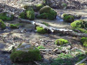 """Малък поток до чешма """"Карабунар"""" в близост до Побити камъни"""