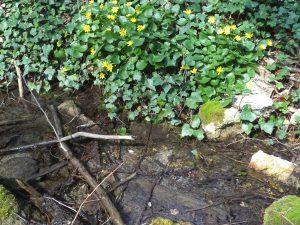 """Екопътека парк """"Златни пясъци"""" - красив поток отрупан с цветя"""
