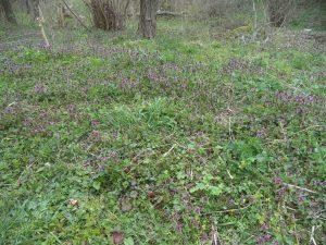 Маршрут Кочмар - Балам дере - красива поляна отрупана с цветя