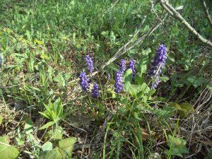 В гората край кв. Аспарухово - красиви цветя