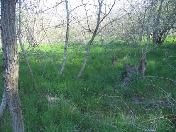 В гората край кв. Аспарухово - зелена картинка сред дърветата