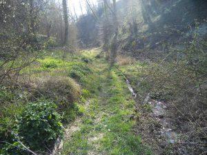 В гората край кв. Аспарухово - в дерето край Темелкова чешма
