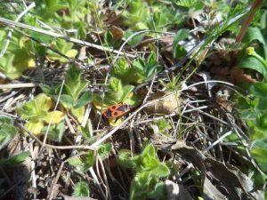 В гората край кв. Аспарухово - красиви насекоми