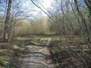 В гората край кв. Аспарухово - пътен разклон