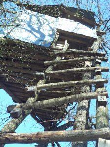 В гората край кв. Аспарухово - дървената стълба за качване до кулата