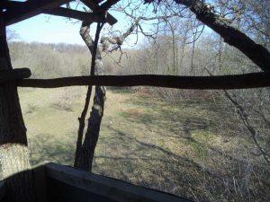 В гората край кв. Аспарухово - изглед към поляната от кулата