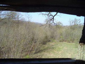 В гората край кв. Аспарухово - изглед от дърената кула