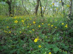 Много красива поляна с цветя в гората край Варненското езеро