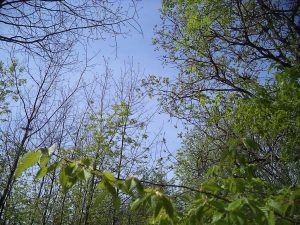 Красотата на гората край кв. Звездица