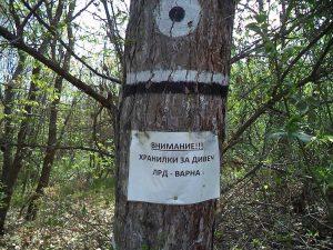 Маркировка на лесничейството върху дърветата