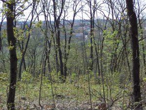 Изглед към кв. Звездица от гората