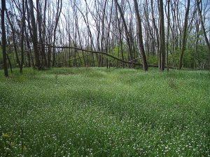 Страхотна поляна с много цветя в гората край кв. Звездица