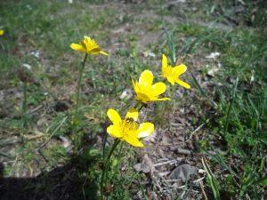 Красиво цвете с кацната пчела в гората край Варненското езеро