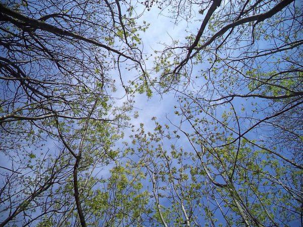Страхотен изглед към небето от гората край кв. Звездица