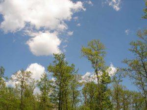 Много красив пейзаж край с. Близнаци - красивото небе над гората