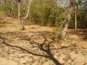 Малка поляна подходяща за къмпинг в гората над плаж Папаз кулак