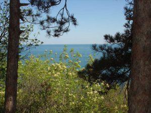 Изглед към морето от гората над плаж Папаз кулак