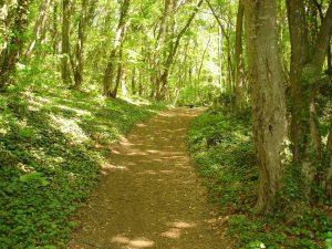 """Екопътека парк """"Златни пясъци"""" - красотата на природата по маршрута през гората"""