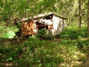 """Екопътека парк """"Златни пясъци"""" - заслон Бежаната сред гората"""