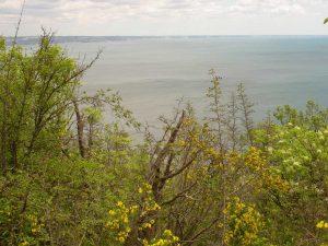 """Екопътека парк """"Златни пясъци"""" - изглед към морето от гората над Кранево"""