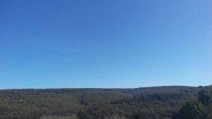 Красивата гора край кв. Звездица