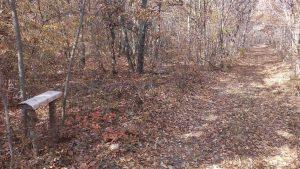 Маршрут Аксаково - Калиманци - красива горска пътека и пейка за почивка