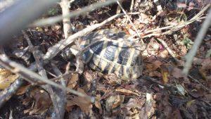 Маршрут Аксаково - Калиманци - малка костенурка в гората