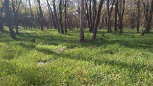 Маршрут Аксаково - Калиманци - зелена поляна пълна с цветя