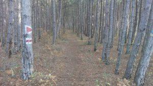 Неповторимо красива горска пътека сред боровата гора над местност Сотира