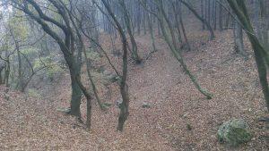 Красивата гора край кв. Виница