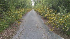 Пътя към изоставеното поделение в местност Калето над Кранево отрупан с цветя