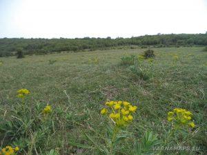 Красива поляна над с. Староселец