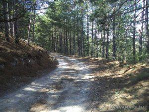 """Екопътека """"Батаклията"""" - красив горски път"""