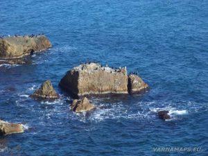 """Резерват """"Яйлата"""" - богатата животинска популация на скалите"""