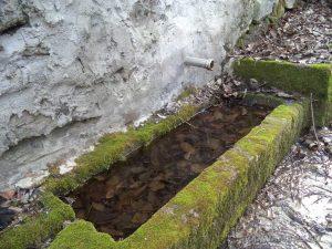 Петрич кале - селска чешма в гората край бунгалата