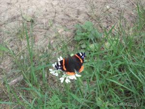 Водопад Совата - красива пеперуда кацнала на цвете край водопада