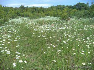 Голямото було - поляната отрупана с билки