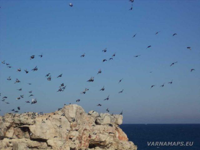 Екопътека Тюленово - летящи гълъби над скалите