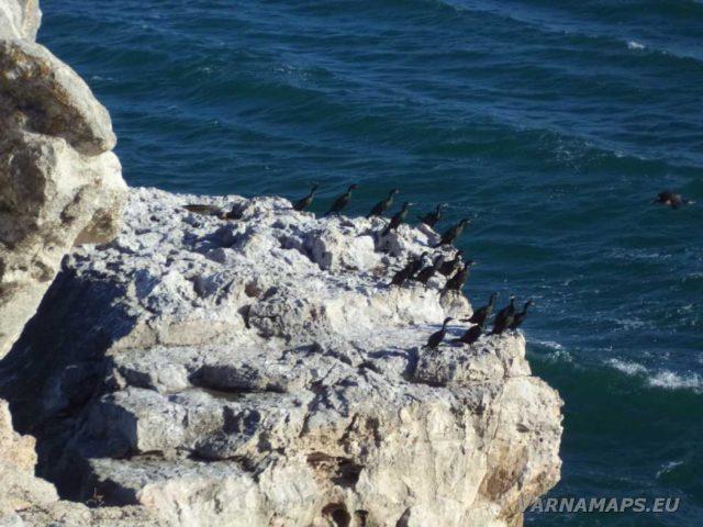 Екопътека Тюленово - кацнали птици на скалата