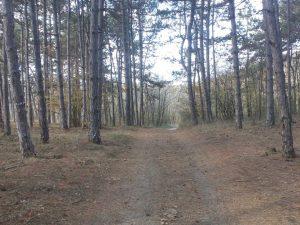 Изглед от красивата гора край Аксаково