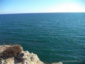 """Екопътека """"Тюленово"""" - птици летящи над морето край скалите"""
