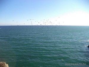 """Екопътека """"Тюленово"""" - ято птици летящи над морето"""