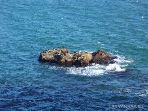"""Екопътека """"Тюленово"""" - самотна скала с птици в морето"""