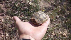 Малка костенурка в ръката