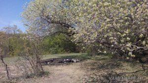 Страхотно масно за пикник в гората над Владиславово