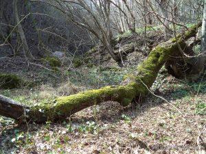 Равненски водопад - дерето под водопада изпълнен с красиви паднали дървета