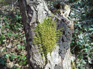 Равненски водопад - красив горски мъх на паднало дърво
