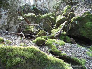 Равненски водопад - красиви речни камъни, покрити със зелен мъх