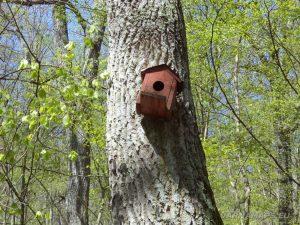 Къщичка за птици на дърво в гората