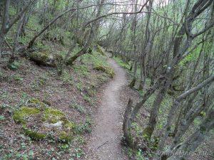 Водопад Шарлъка - красивата горска пътека към водопада